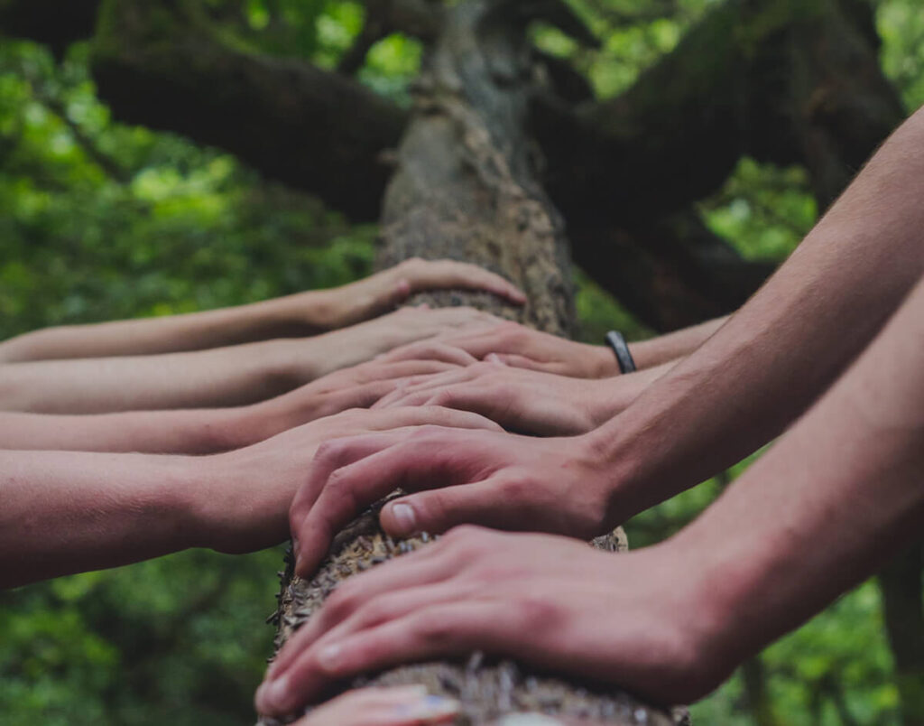 4 people's hands on tree trunk